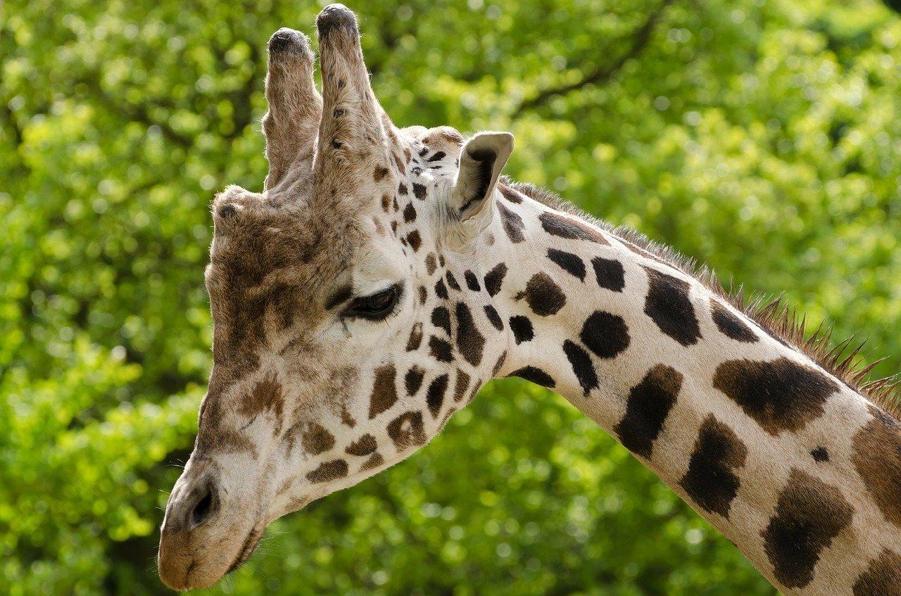 Marwell Zoo just round the corner!
